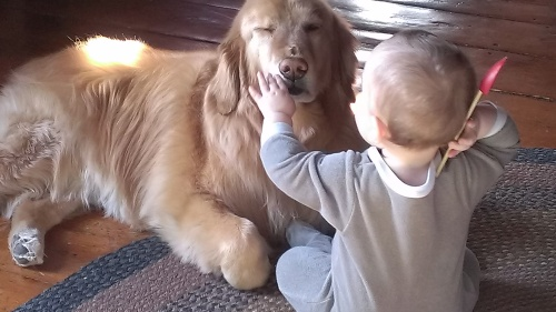 A very patient doggie.